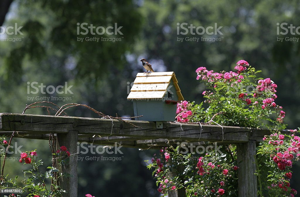 blue birdhouse with bird royalty-free stock photo