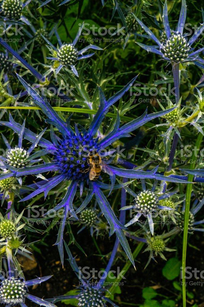 Blue Botanics stock photo