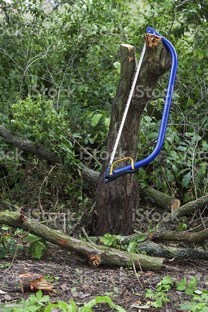 Blue bucksaw with yellow handle stock photo
