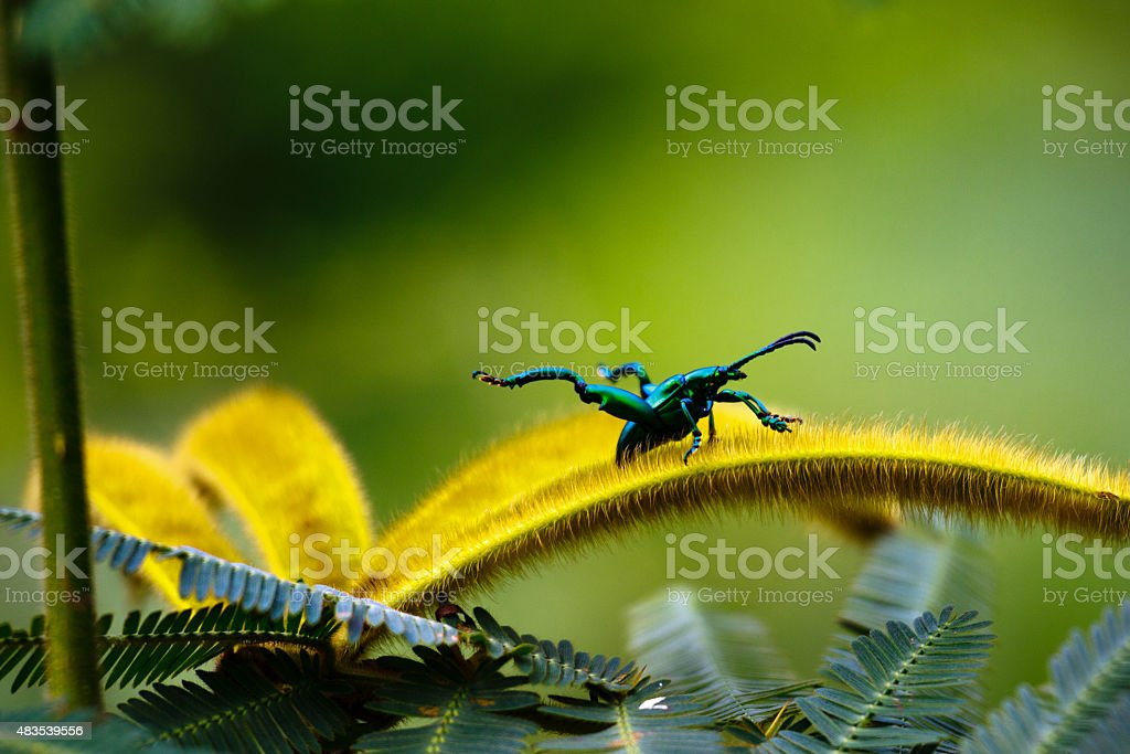 Blue Bug is ready to fly away stock photo