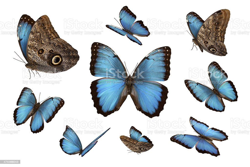 Blue Butterflies stock photo