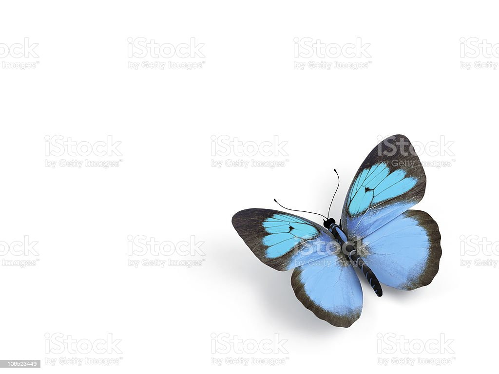Blue butterfly isolated on white stock photo