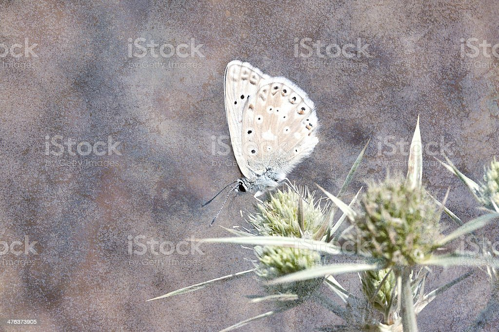Blue butterfly. stock photo