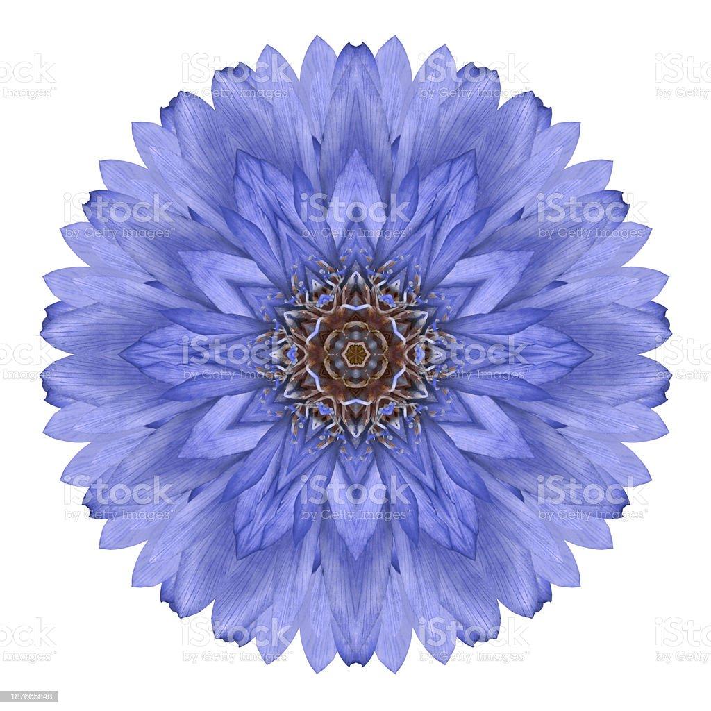 Blue Chrysanthemum Mandala Flower Kaleidoscope Isolated on White stock photo