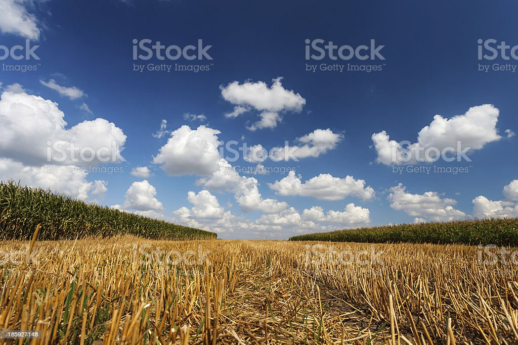 Blue cloudy sky over the stubble royalty-free stock photo