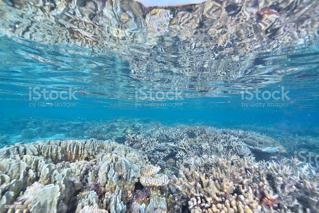 Corais azuis foto de stock royalty-free