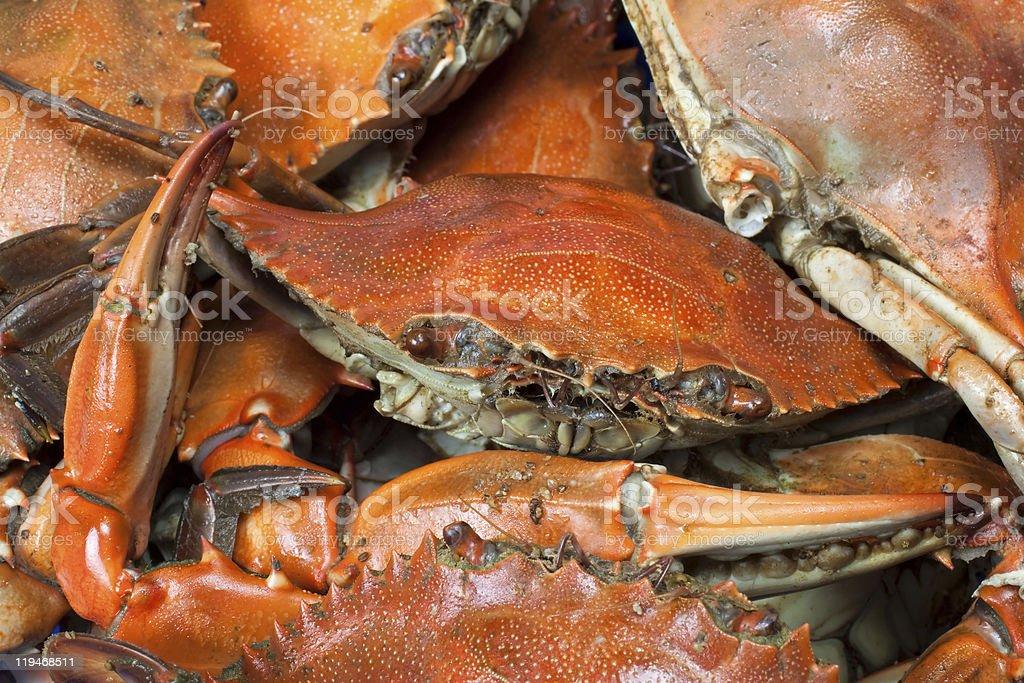 Blue Crab Macro Background stock photo