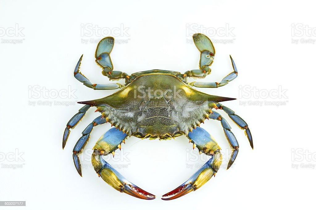 how to clean blue crab