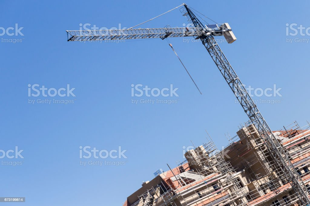 blue Crane in a work stock photo