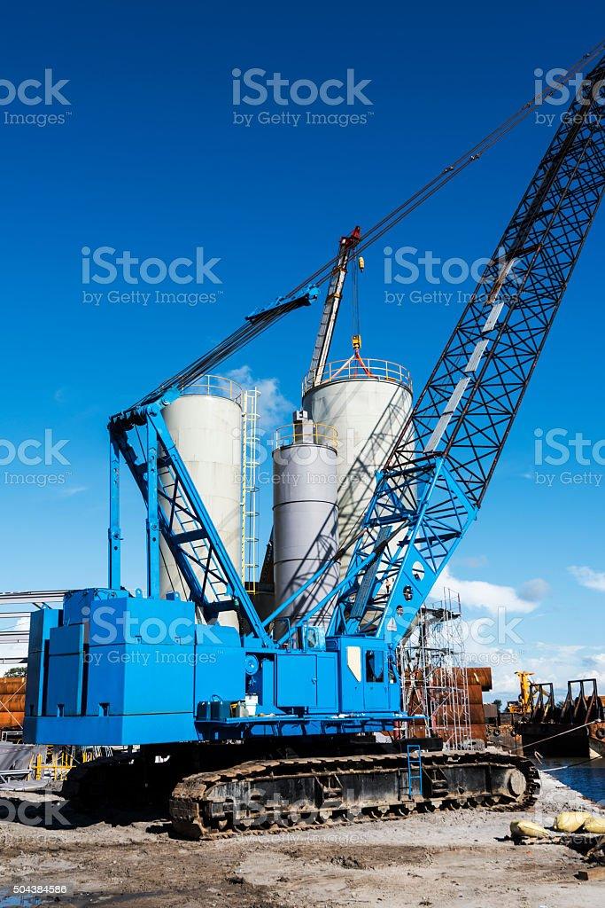Blue Crane stock photo