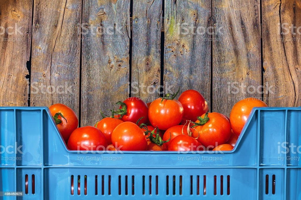 Blue crate with fresh tomatoes stock photo