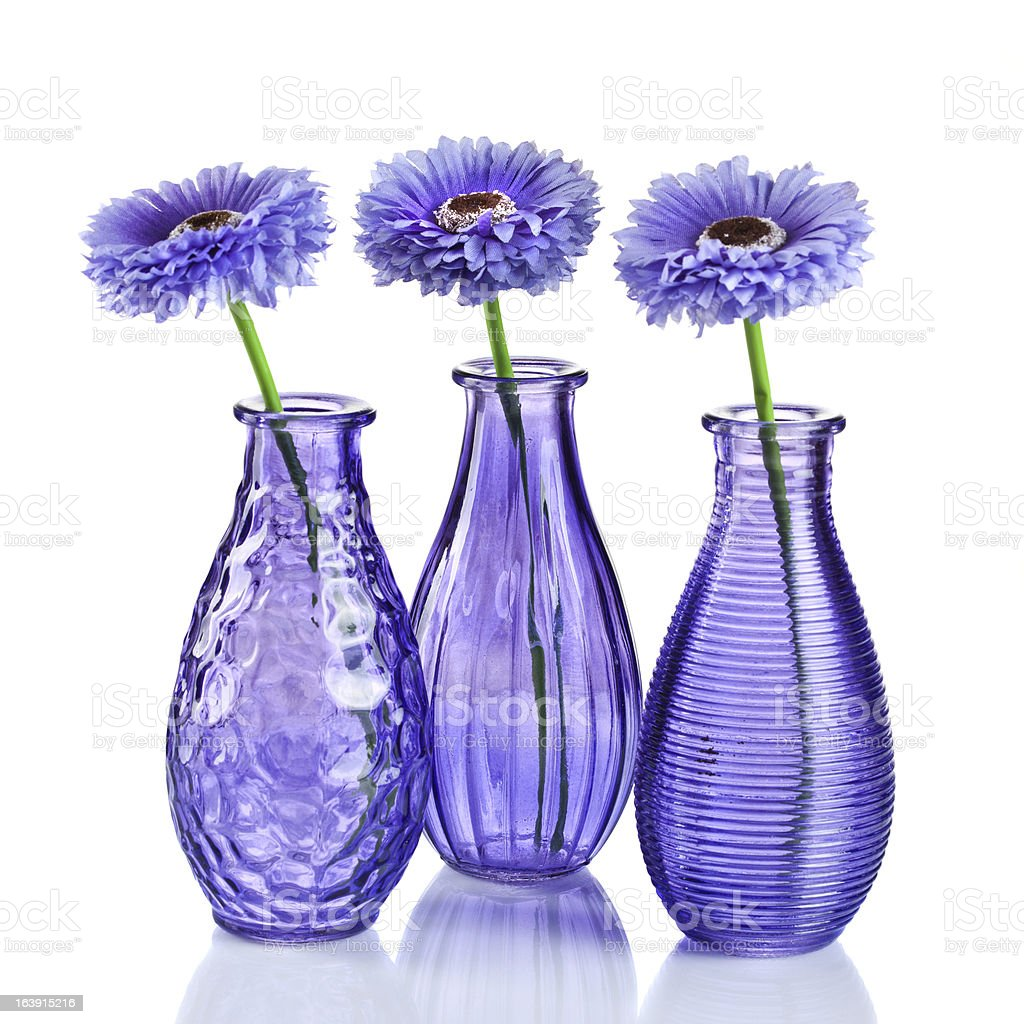 Blue daisy-gerbera in glass vase on white royalty-free stock photo