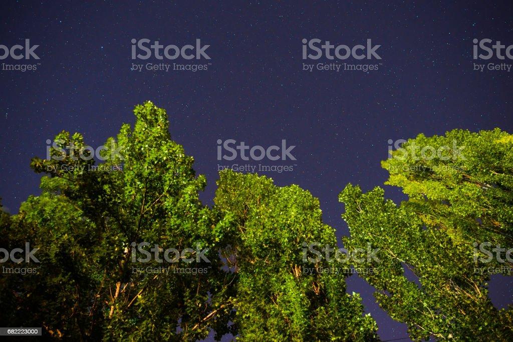Blue dark night sky with many stars above field of trees. stock photo