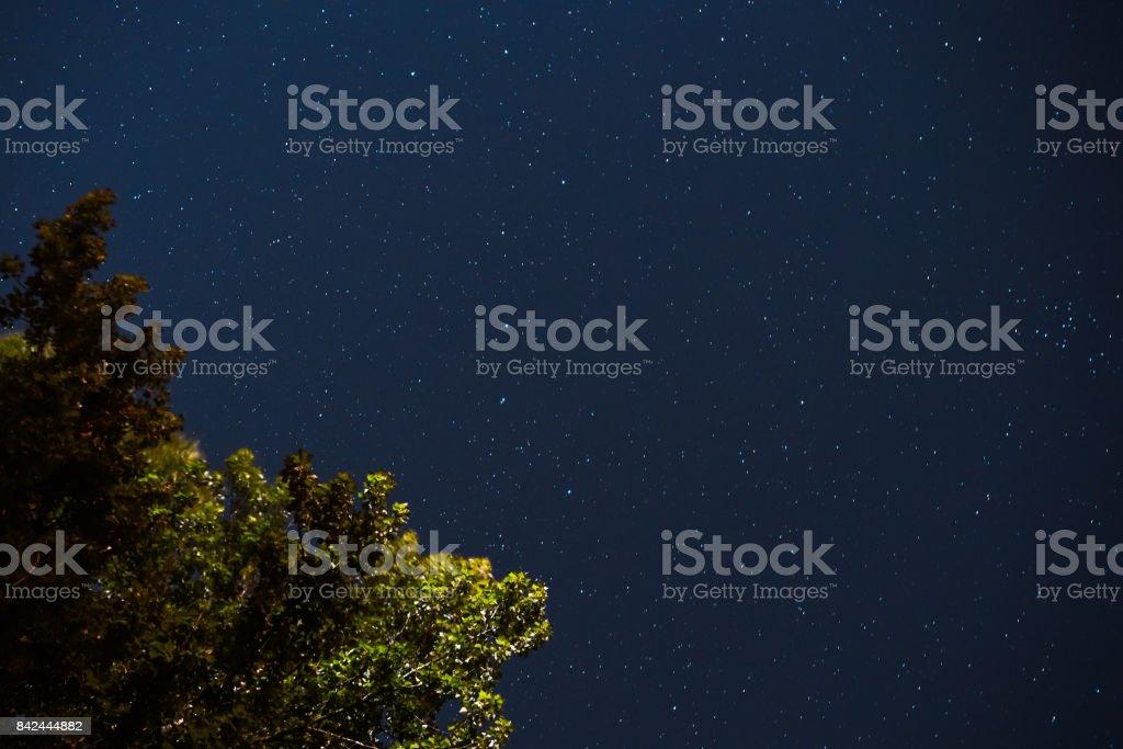 Blue dark night sky with many stars above field of trees. Milkyway...