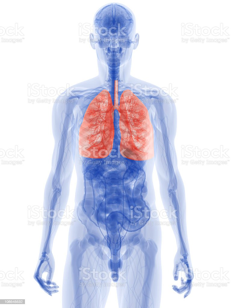Blue diagram of human body with lungs highlighted in red royalty-free stock photo