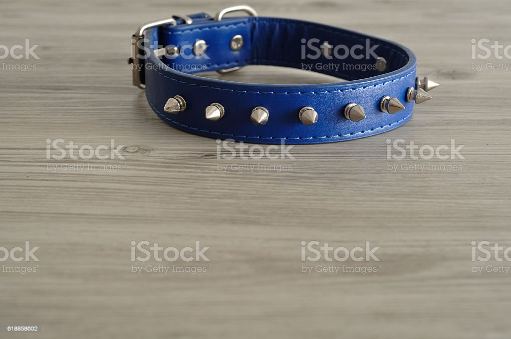 Blue dog collar decorated with spikes stock photo