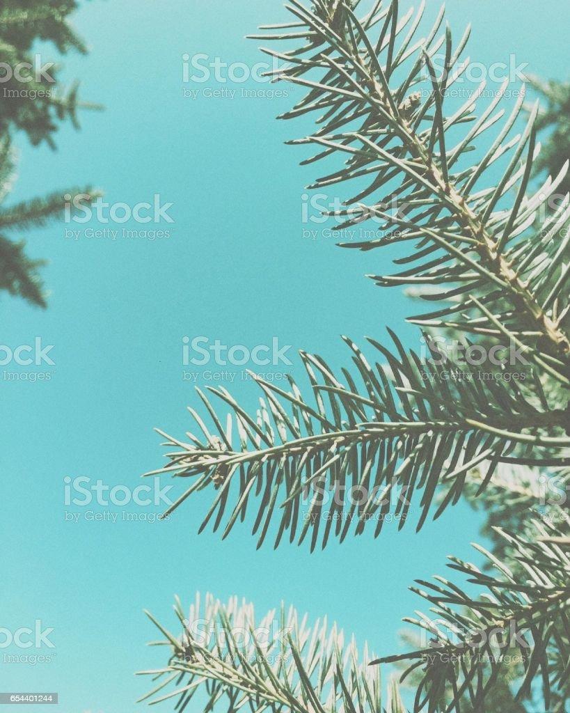 Blue Dream stock photo