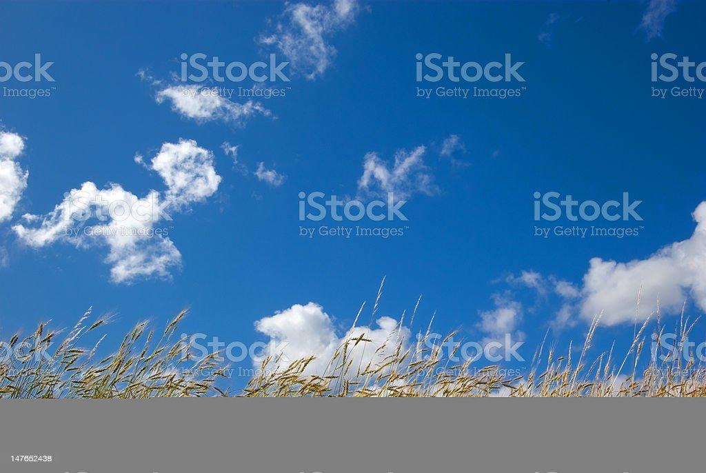 Blue & dry royalty-free stock photo