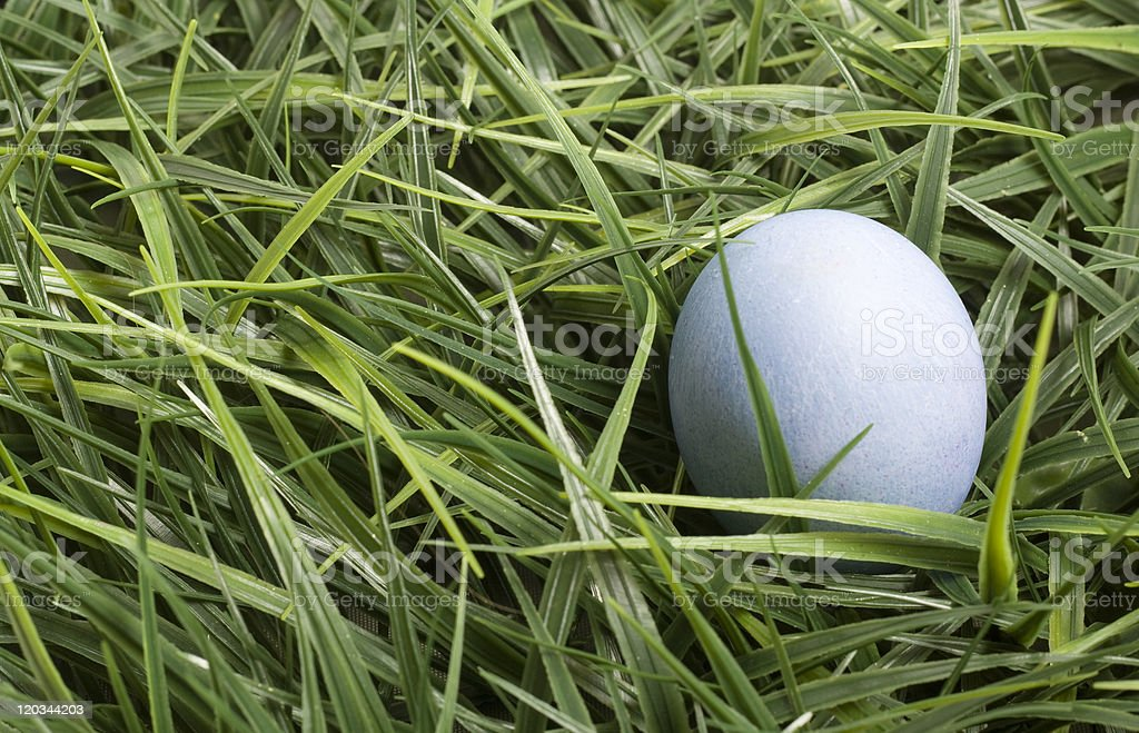 Blue Easter Egg in Grass stock photo