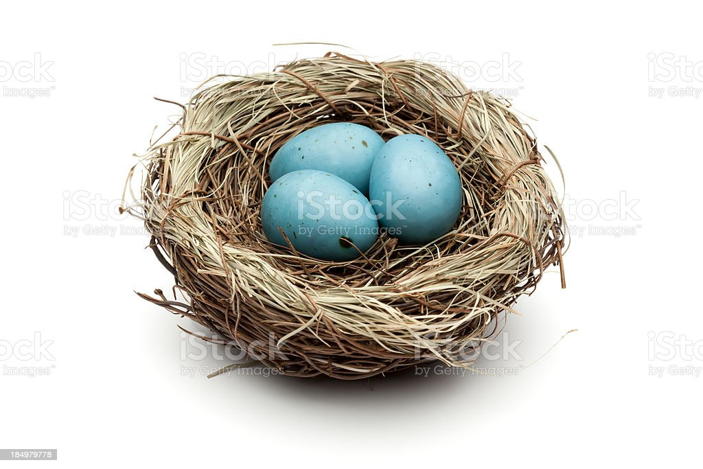 Blue Easter Eggs In Bird Nest stock photo