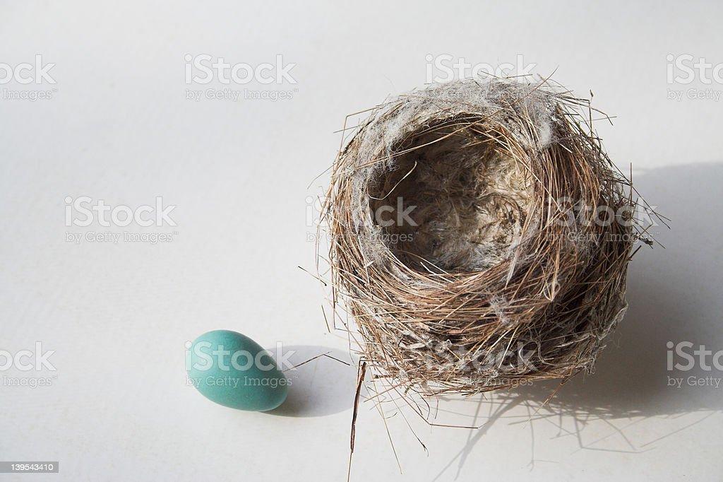 Niebieski pisanka poza nest zbiór zdjęć royalty-free
