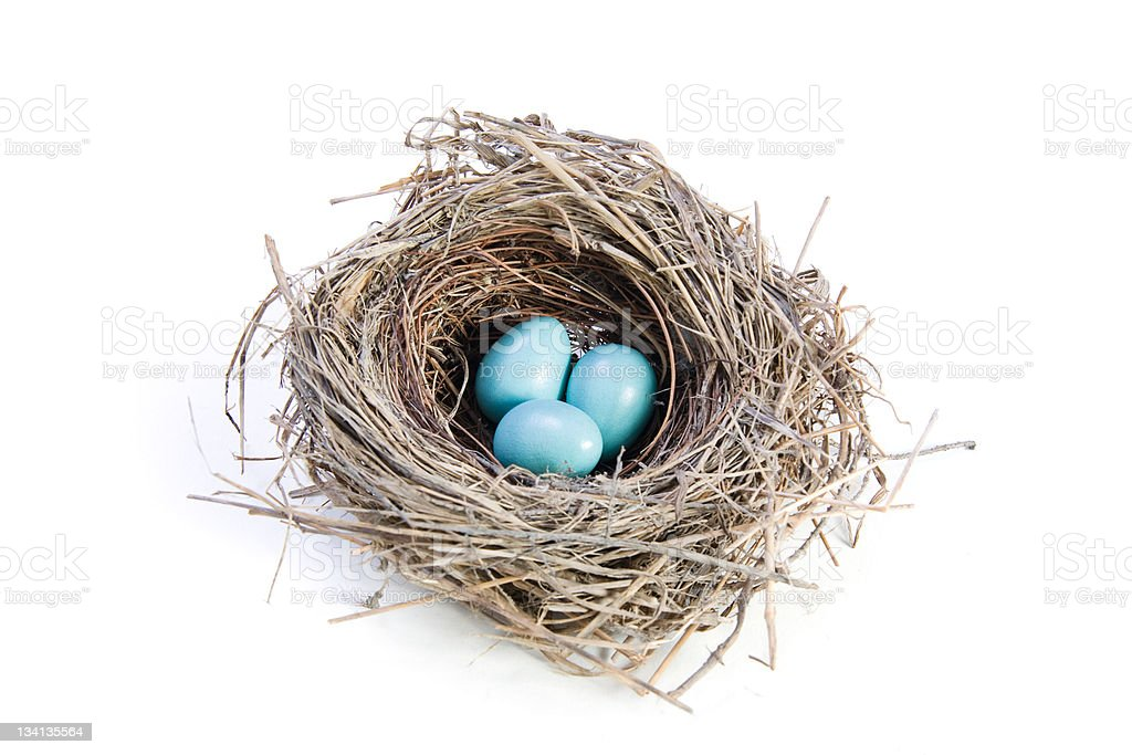 Blue eggs in a birds nest on white background stock photo
