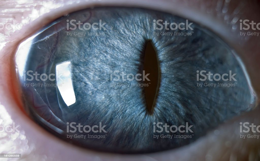 Blue eye macro details royalty-free stock photo