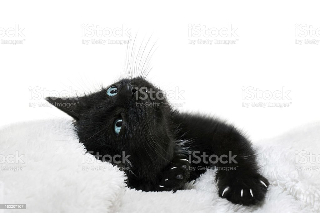 Blue Eyes Black Kitten royalty-free stock photo