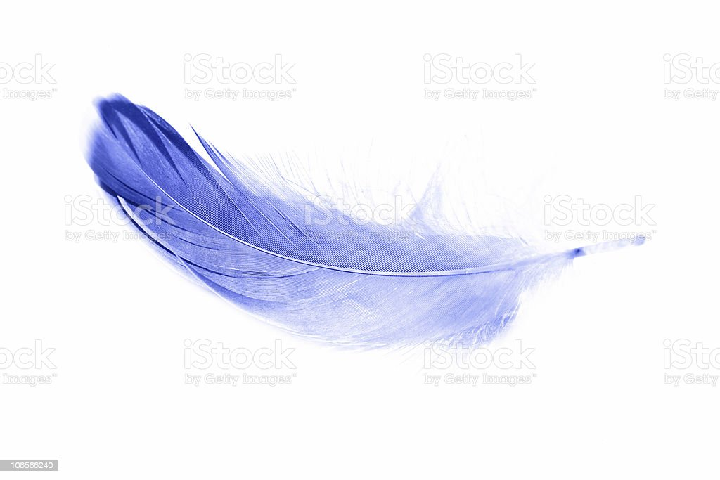 Blue feather on white background royalty-free stock photo