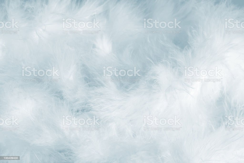 Blue Feathers stock photo