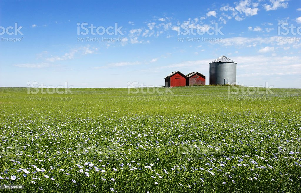 Blue Field stock photo