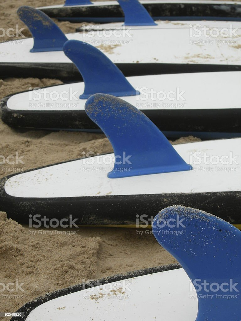 Blue fin boards royalty-free stock photo