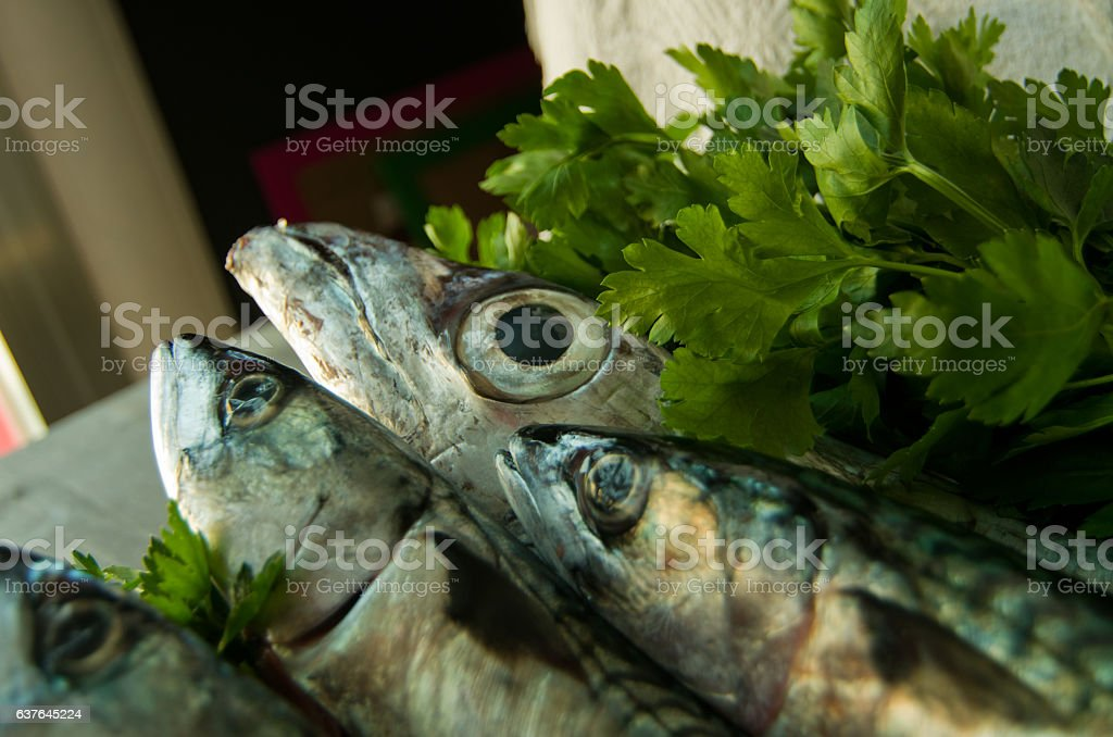 blue fish freshly caught great for a healthy diet stock photo