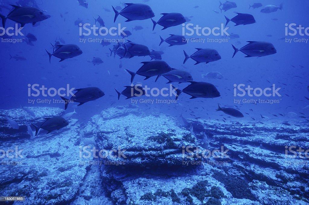 Blue Fish stock photo