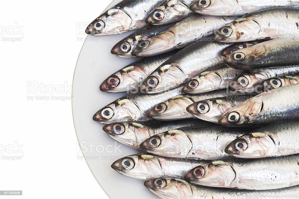 Blue fish (anchovies) stock photo