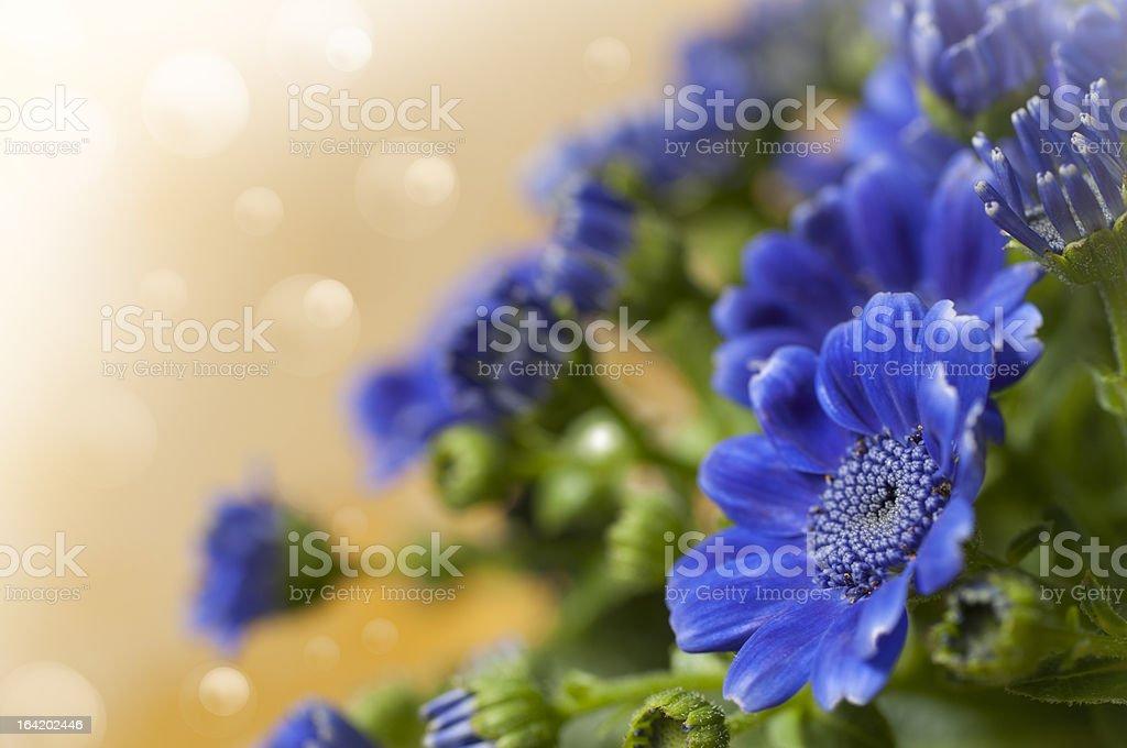 blue flowe royalty-free stock photo