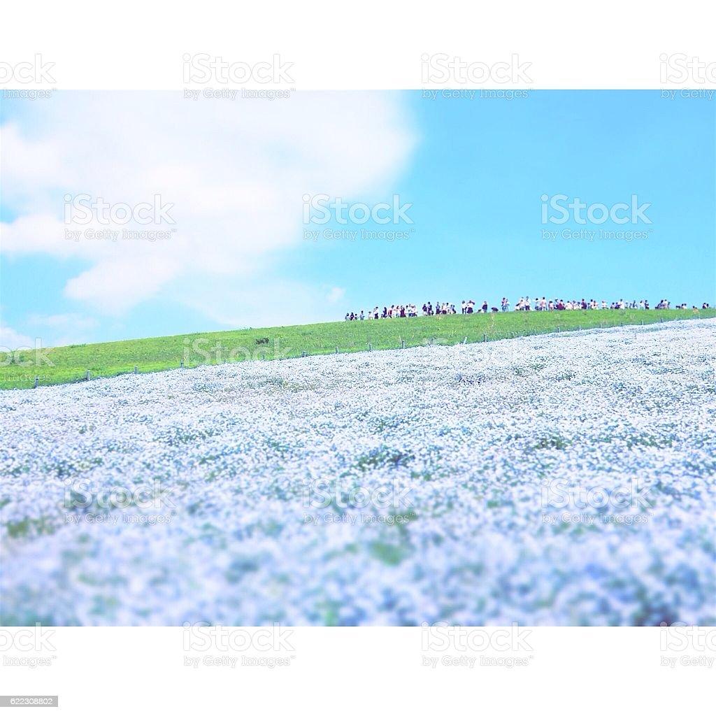 blue flower garden royalty-free stock photo