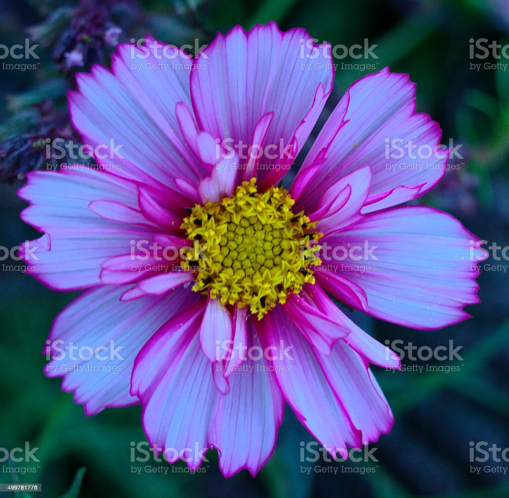 Blue flower in nature stock photo