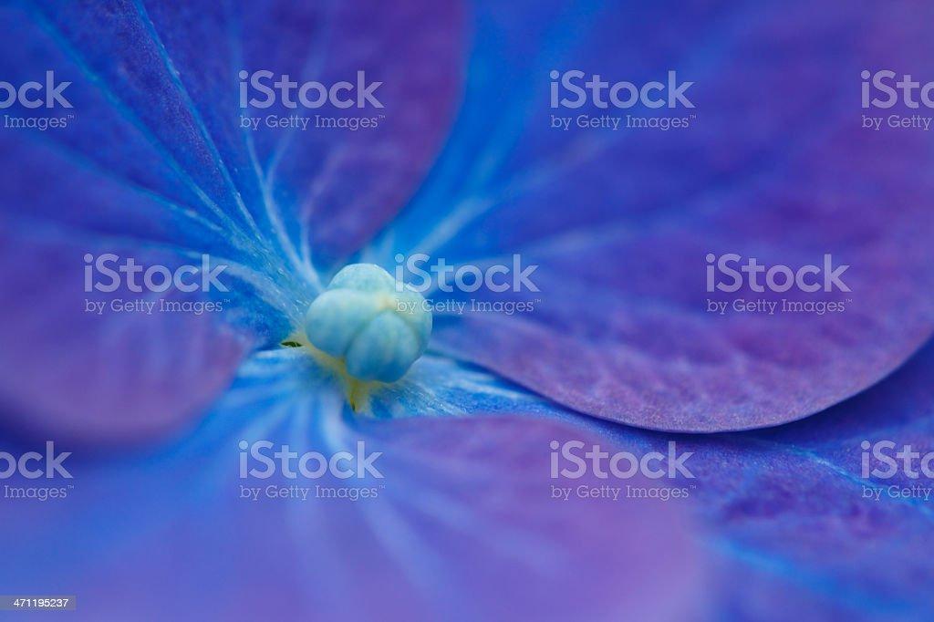 Blue flower macro stock photo
