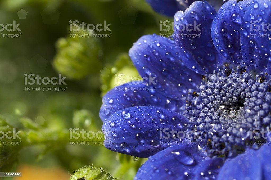 blue flower royalty-free stock photo