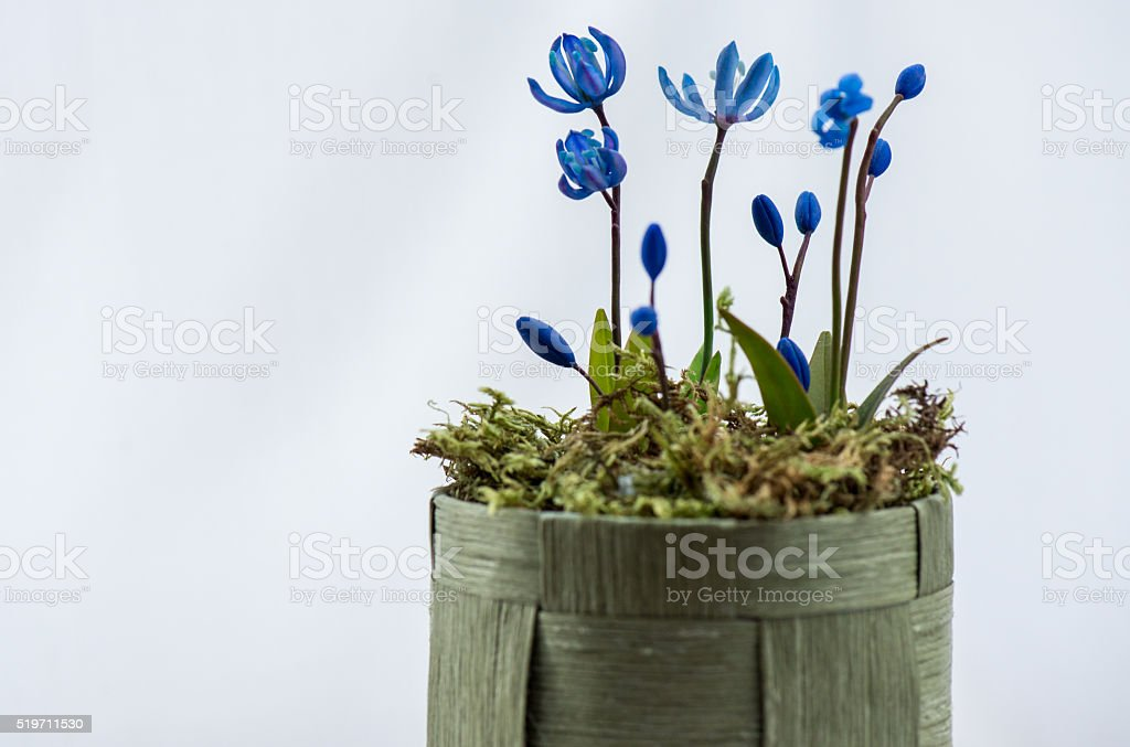Blue flowers from clay stock photo