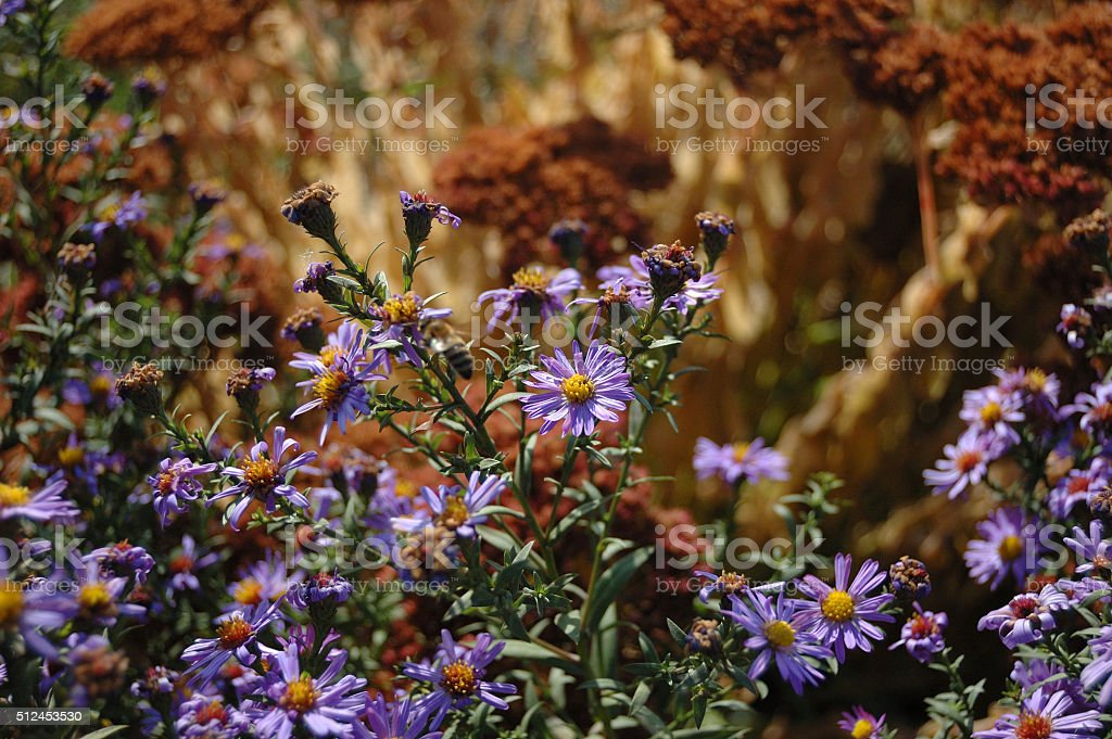 blue flowers in autumn stock photo