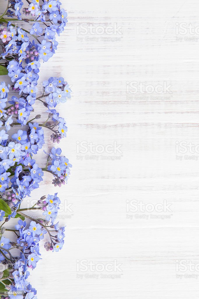 blue flowers on white background stock photo