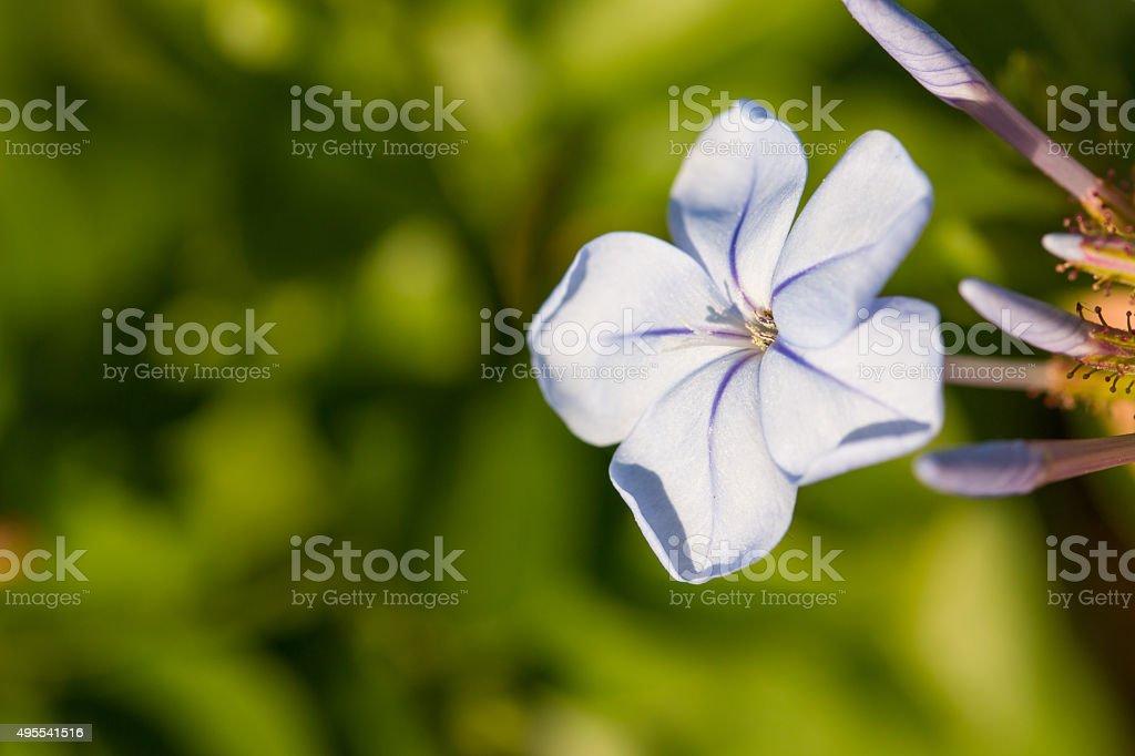 Blue flowers. stock photo