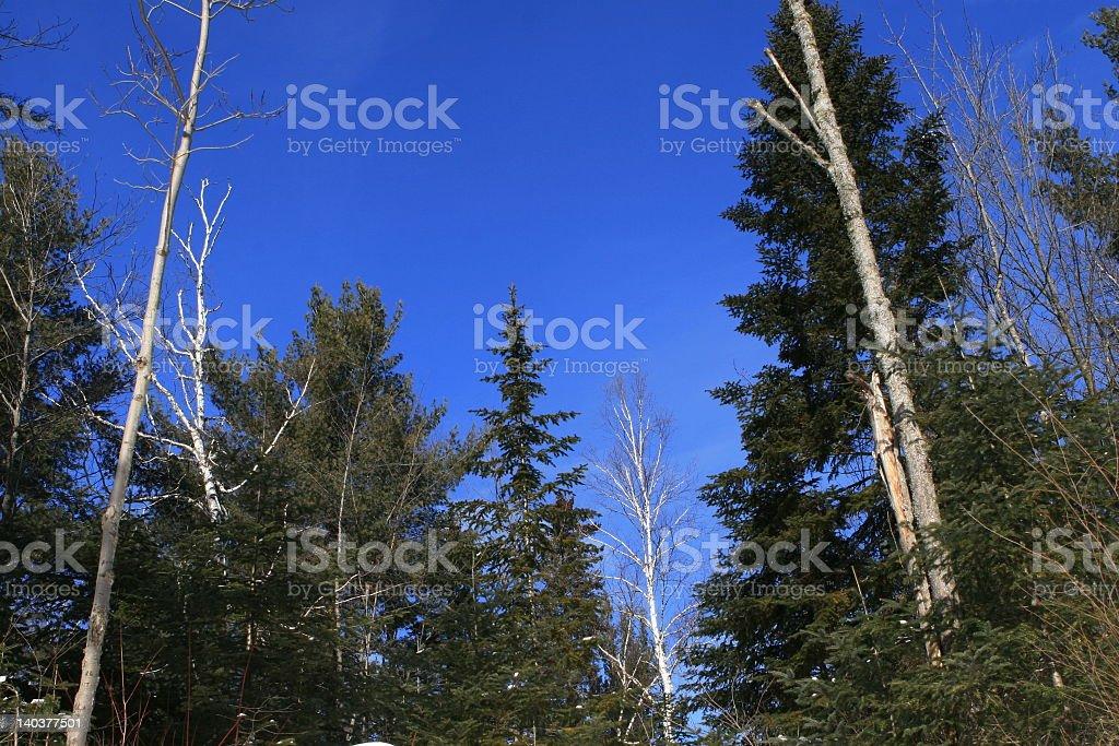 Forêt bleue ciel photo libre de droits