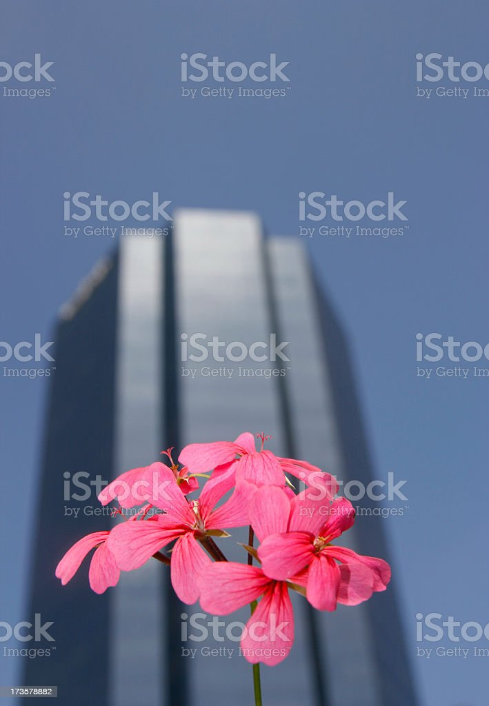 Blue Glass Building in Springtime royalty-free stock photo