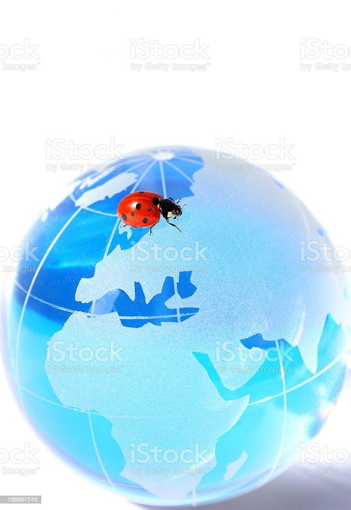 Blue Globe and Ladybug stock photo