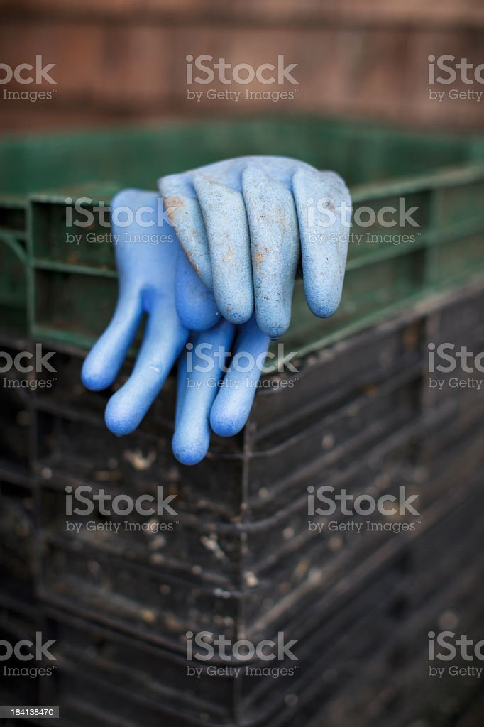 Blue Gloves stock photo