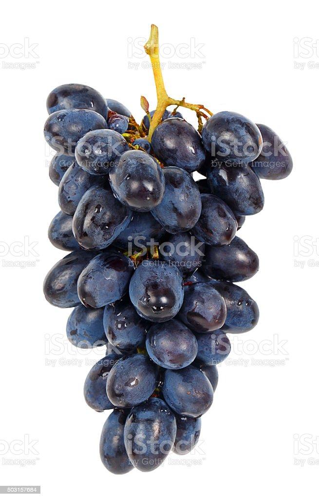 Blue grape stock photo