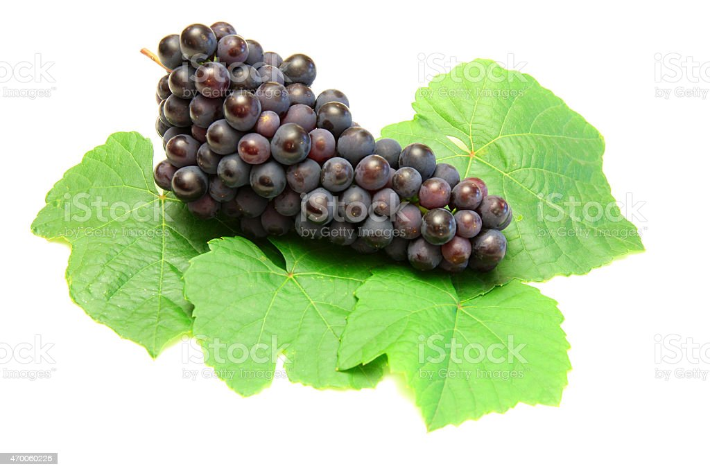 Blue grape with green leaf, isolated on white background stock photo